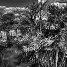 Black water reflections - North Head, Sydney by Jason Ruth