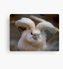 Look Mum..I Can Make Angel Wings!! - Juvenile Dove - NZ Canvas Print