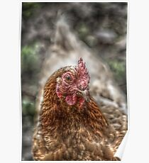 Hen HDR Poster