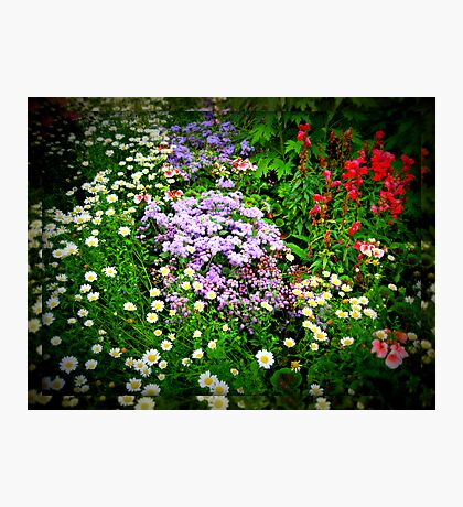 Lomoish Flowers  in Mirrored Frame Fotodruck