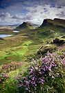 Scotland: My Bonny Heather by Angie Latham