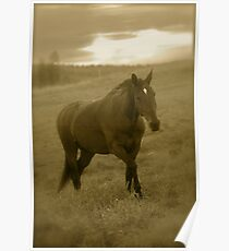 4 You !   by Brown Sugar .  has been FEATURED in EQUINE Portrait Photography . Views (51) thx! Poster