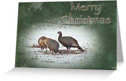 Christmas Card - Wild Turkeys by MotherNature