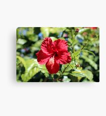 Hibiscus In, Hibiscus Out Canvas Print