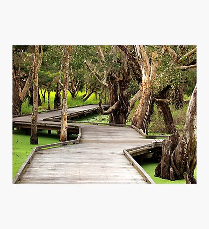 Melaleuca Boardwalk Photographic Print