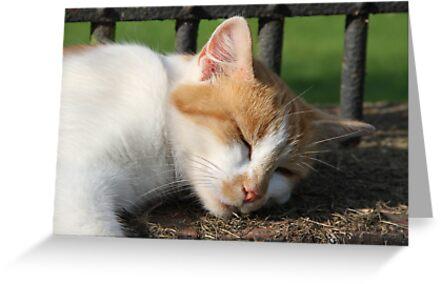 Cat Nap by Samantha Higgs