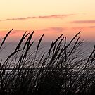 Dune Grass At Sunset by Samantha Higgs