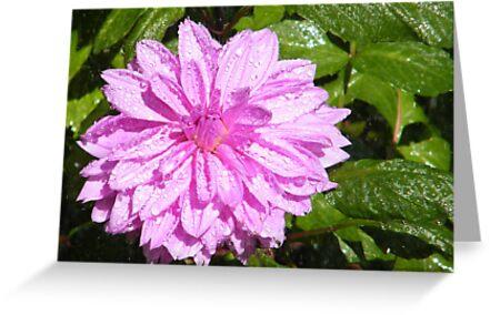 Jersey City, New Jersey, Van Vorst Park, Flower Close-Up, by lenspiro