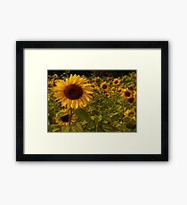 Fractual Sunflowers Framed Print