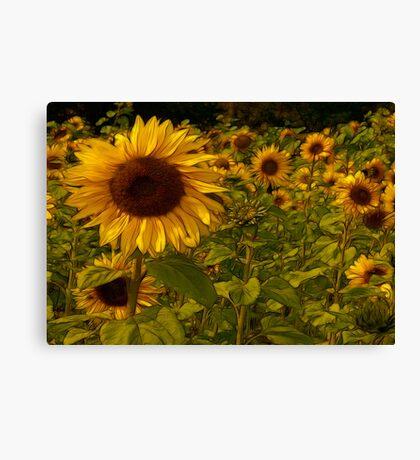 Fractual Sunflowers Canvas Print