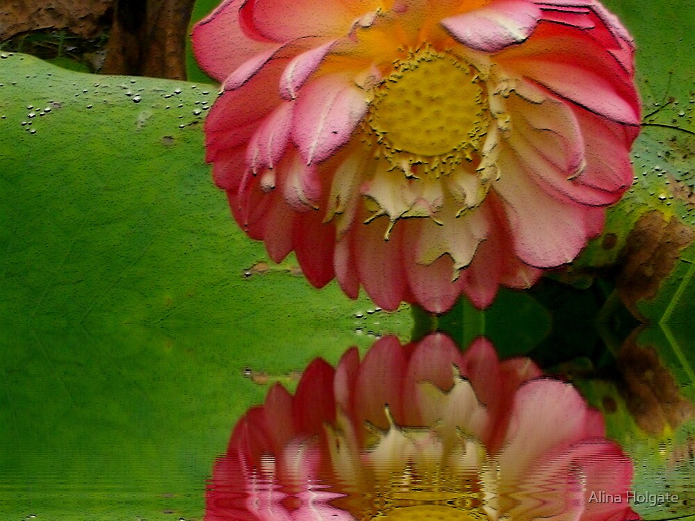 Lotus Flower Colour Burn With Effects By Alina Holgate Redbubble