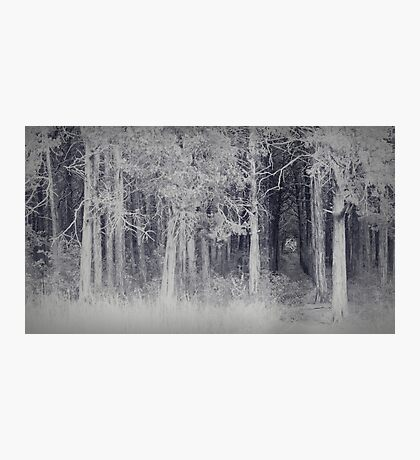 parallel forest 2 Photographic Print