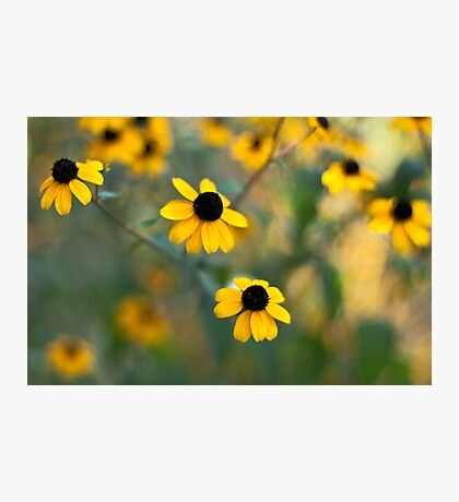 Yellow Softness Photographic Print