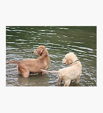 Puppies Attention Caught Photographic Print