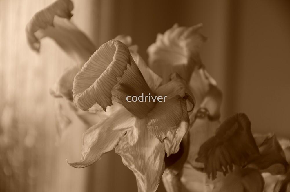 Daffodils by codriver