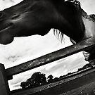 Horse by Neil Messenger