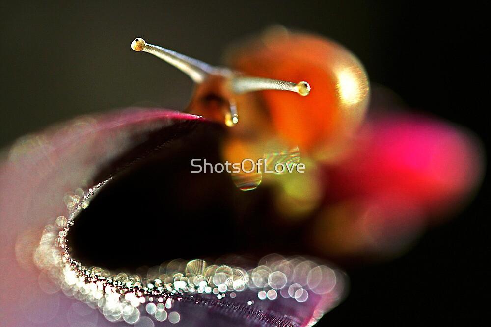Snail Trail by ShotsOfLove