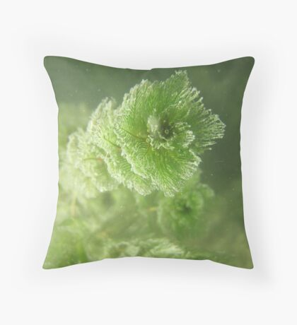 Bubble Eye Weed Throw Pillow