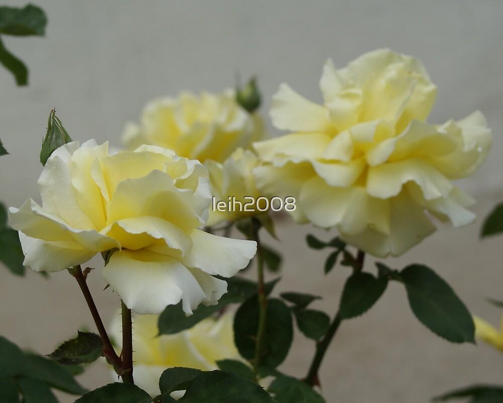 Elegant Yellow (2) by leih2008
