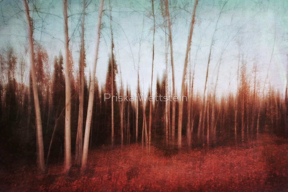 autumn forest by Priska Wettstein