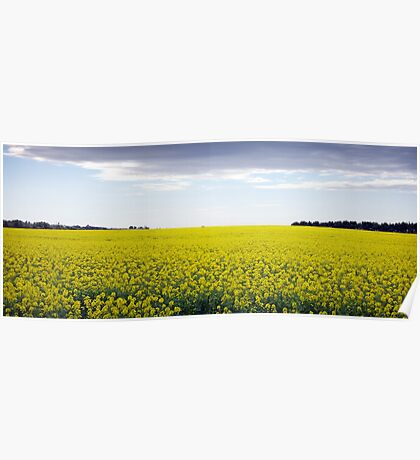 Yep... I think that's Canola! Poster