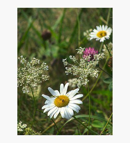 All the Pretty Little Wild Flowers Fotodruck
