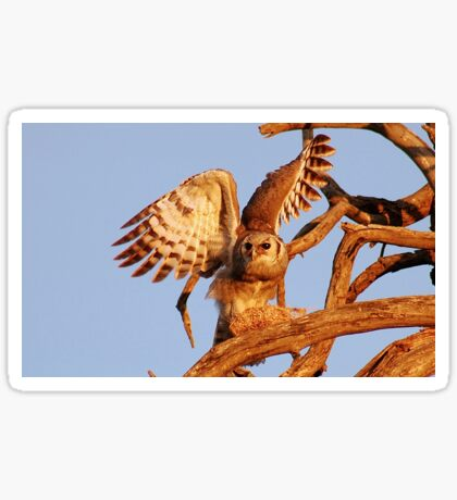 THE GIANT EAGLE OWL - and the weavers nest Sticker