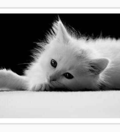 Adorable White Kitten Sticker
