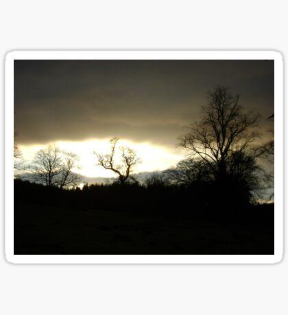 Eye of Trees (sunset, Falkland) Sticker