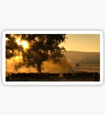 Cattle Sunrise 2 - Parkes, NSW Sticker