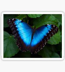 Blue Morpho Butterfly Sticker