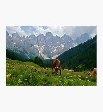 Lámina fotográfica Paneveggio in the Dolomites