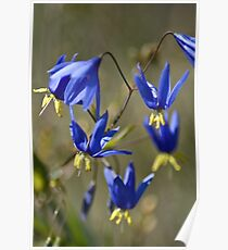 Nodding Blue Lily Poster