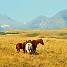 Range Horses near Browning, Montana by Donna Ridgway
