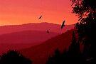 Red Sunset by Vicki Pelham