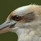 Kookaburra by Tom Newman