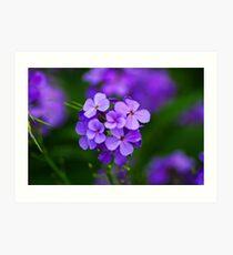 A simple purple flower Art Print