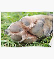 A Dog's Footprint Poster