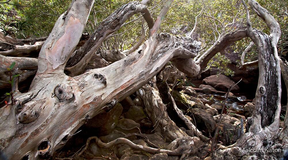 Tree Wreck  by Malcolm Katon