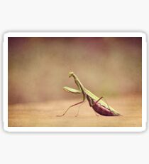 Praying Mantis - Queen of the Garden Sticker