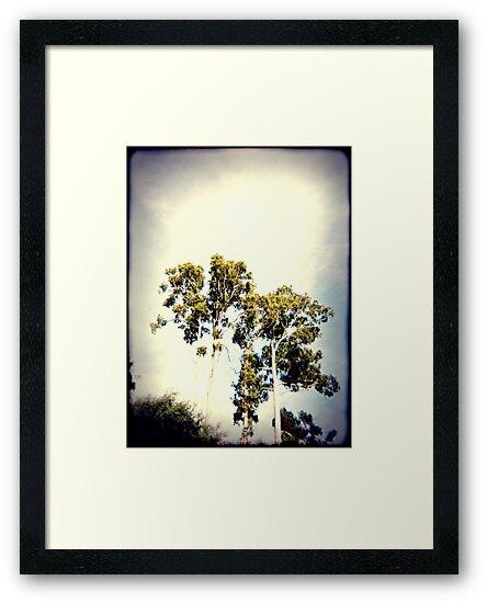 Ghost trees by Jodi Fleming