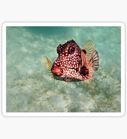 trunkfish Sticker