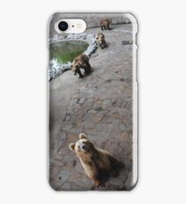 Bears iPhone Case/Skin