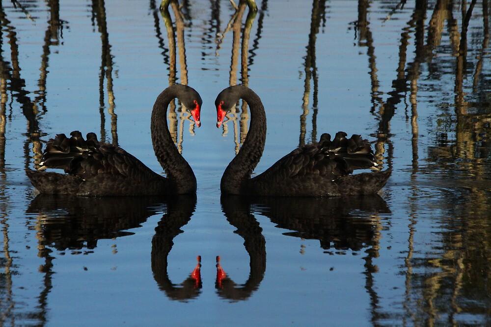 Symmetry by byronbackyard