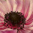 Anemone by Margi
