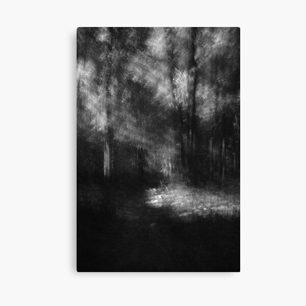 Where the light falls Lou Campbell Nature Preserve Canvas Print