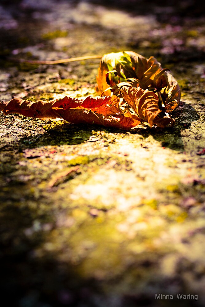 Autumn by Minna  Waring