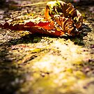 Autumn by Minna  Waring