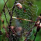 Raindrops keep falling on my web by Alan Mattison