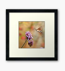 Hummingbird hawk-moth against a Flowery Background Framed Print